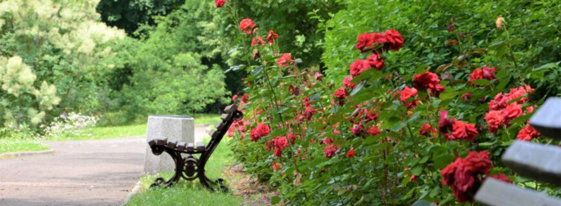Miejski Ogród Botaniczny zaprasza